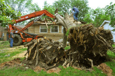 A stump being removed in columbia md